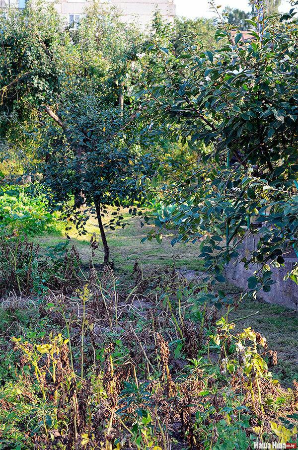 Приметы вишня зацвела в августе