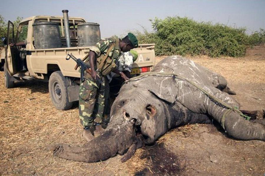 картинка на тему браконьерство в пустыне него