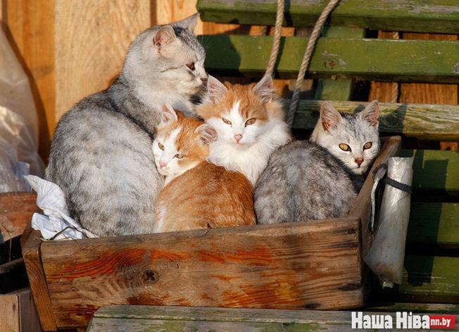заражение коронавирусом кошек